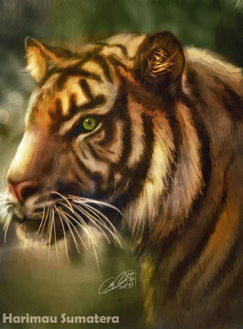 Harimaun Sumatera harimau sumatera by zamboze on deviantart
