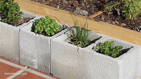 Garden Of Heavy Metals by If You Grow Food In Cinder Blocks You May Be Poisoning