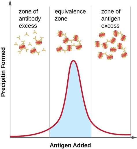 explain the antigen antibody reaction diagram detecting antigen antibody complexes microbiology