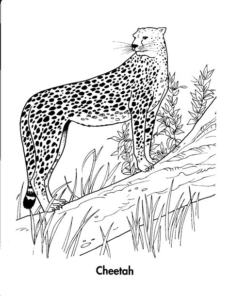 Realistic Cheetah Coloring Pages by Realistic Cheetah Coloring Pages Resume