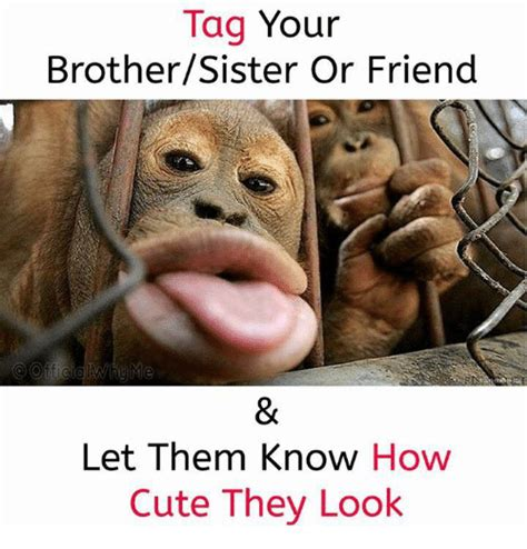 Cute Best Friend Memes - tag your brothersister or friend let them know how cute