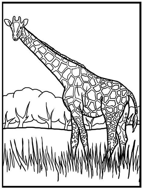 giraffe habitat coloring pages 11 best giraffe ausmalbilder images on pinterest