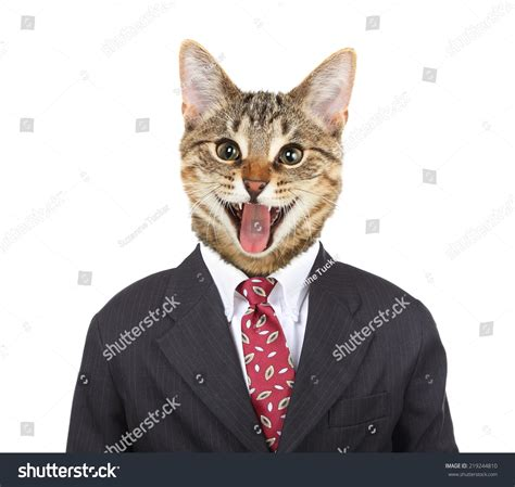 cat in cat in business suit www pixshark com images galleries