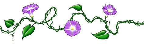 morning glory tattoo designs morning vine design ankle fashion
