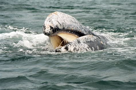 pin by sharon escalante on whales pinterest