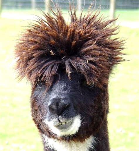 images of image humour animaux gratuit en ligne