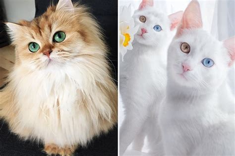 imagenes bonitos de niños os 10 gatos mais bonitos do mundo cosmopolitan