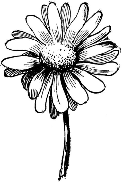 white daisy clipart images clipartcow clipartix