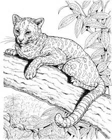 jaguar coloring pages free jaguar coloring pages