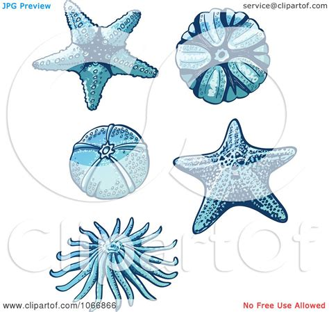 clipart starfish and sea urchins royalty free vector