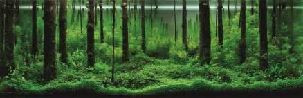 The Green Machine Aquascape The Incredible Underwater Art Of Competitive Aquascaping