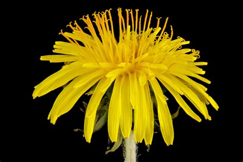 Droege Detox by 5 Plantes Minceur Pour Maigrir Naturellement