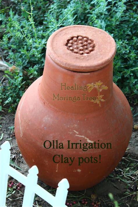 buy irrigation garden olla clay pots moringa trees