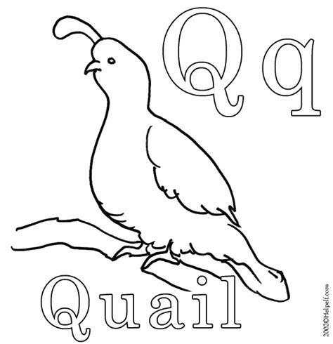 coloring page quail free animals quail printable coloring pages for preschool