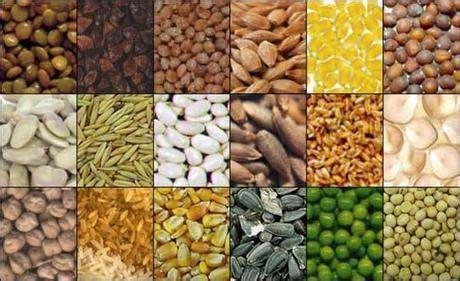 alimenti contengono acido clorogenico le proprieta dei semi oleosi paperblog