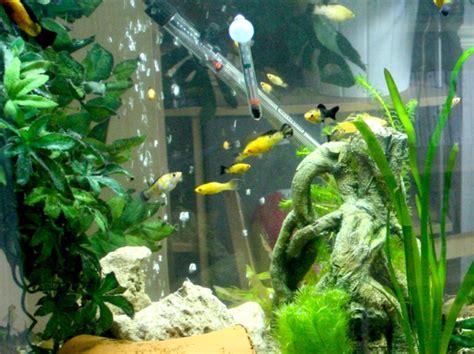 aquarium design eau chaude les poissons d eau chaude