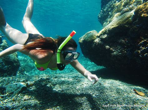 dive resorts anilao diving resort snorkeling philippines photos