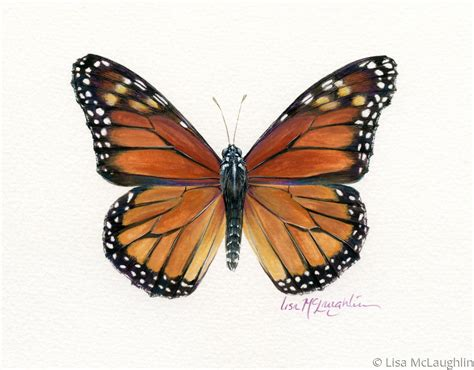 monarch color painting quot monarch butterfly quot original by