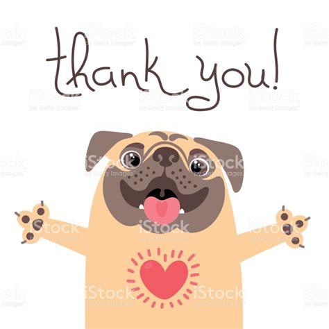 thank you pug says thank you pug with of gratitude stock vector 802822230