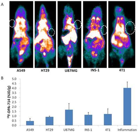 longitudinal pet imaging  muscular inflammation