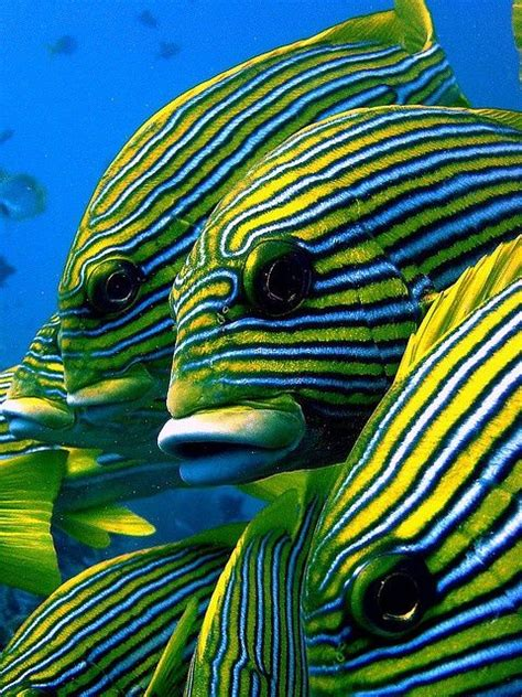 Indecent Tropical Fish Vol 2 189 best images about fish and sea creatures vol 2 on