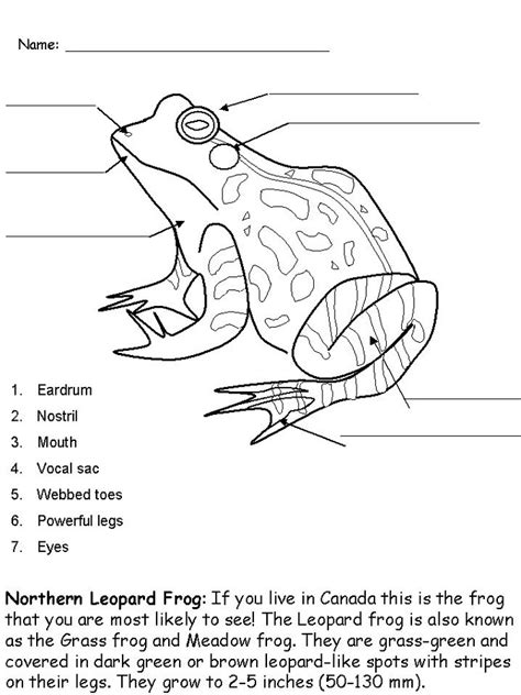 frog coloring worksheet frog activities for activity shelter