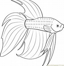 betta fish coloring page images download