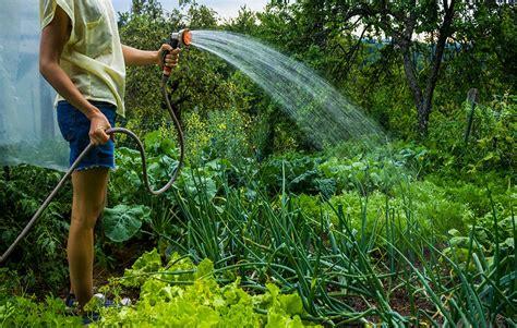How Often Water Vegetable Garden Top 10 Ways To Save Water In Your Garden Rodale S