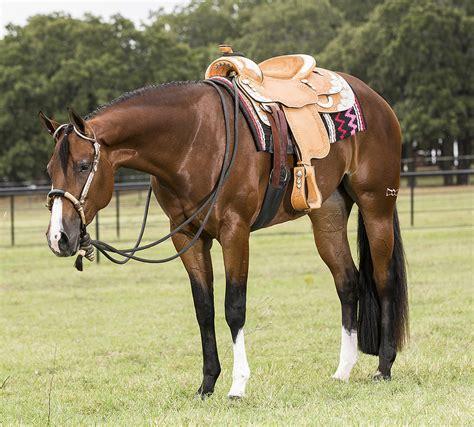 horse saddle quarter horse under saddle 3 4 view western pleasure