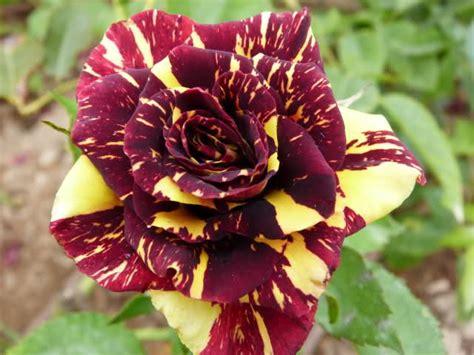 imagenes extraordinarias y bellas image gallery las flores mas lindas