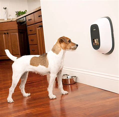 gadgets for pets video phone gives you mobile quality time with your pet
