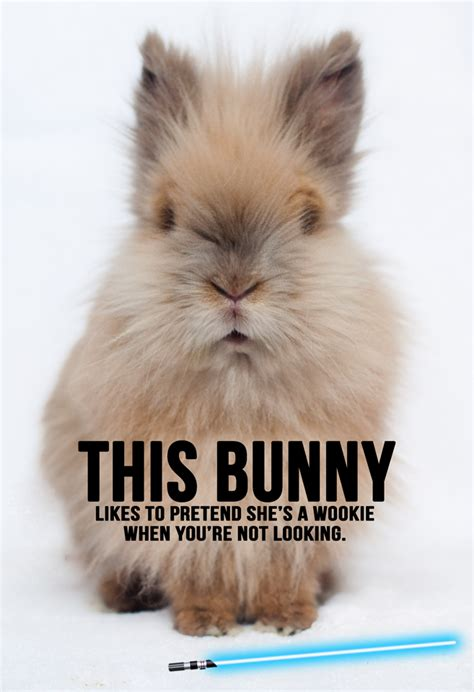 Bunny Meme - rabbit ramblings funny bunny memes bunnies pinterest