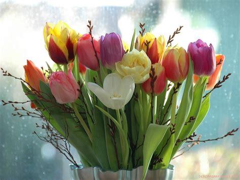 imagenes para fondo de pantalla de tulipanes jarr 243 n de tulipanes