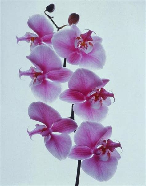 orchid tumblr
