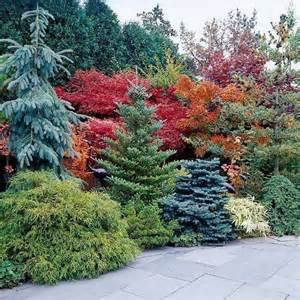 1000 ideas about evergreen shrubs on pinterest shrubs evergreen and hedges