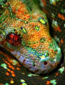 color python green tree python color me happy