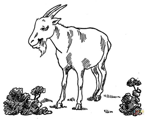 realistic goat coloring pages billy goat coloring page coloring home