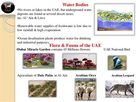 Balance Water Floras Your Travels by United Arab Emirates Travelgeography