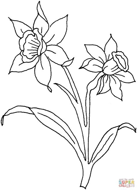 daffodil bud coloring pages