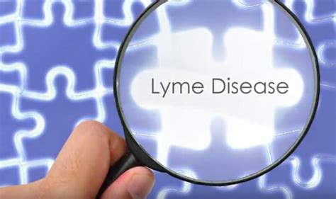 chronic lyme disease health news tips trends online free chronic lyme disease summit starts next week
