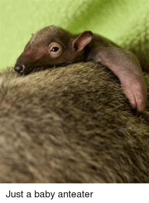 Anteater Meme Generator - anteater meme 28 images just a baby anteater anteater