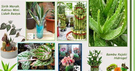 Teh Hijau D Apotek putra garden promo tanaman hias dan apotek hidup bulan ini