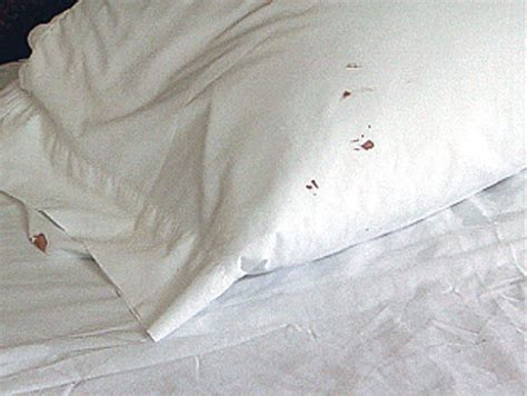 bed bug blood stains how do you know if your have bed bugs 7 tell tale signs