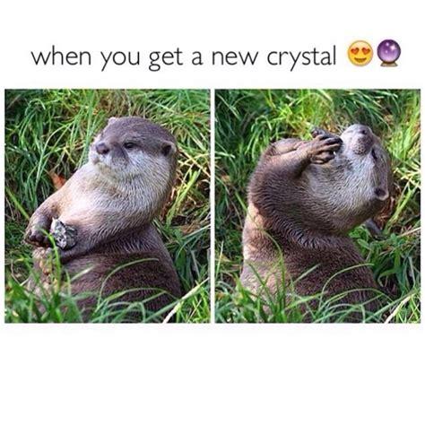 otter meme 1000 ideas about otter meme on otter meme