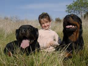 guard dogs wallpapers fun animals wiki videos pictures