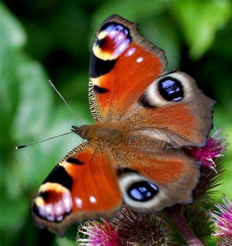 imagenes mariposas mas bonitas mundo las mariposas m 225 s bellas del mundo im 225 genes taringa