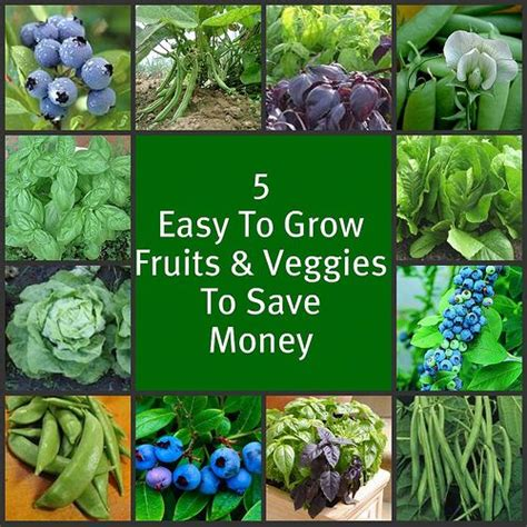 vegetables easy to grow 5 easy to grow fruits vegetables gardening at