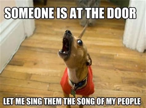 Dog Owner Meme - 14 things only dog owners will understand you ll def be