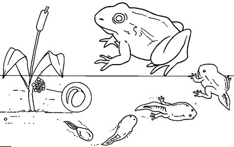 free coloring pages of tadpole