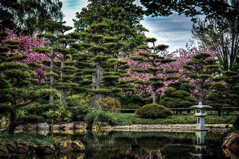 Japanischer Garten by Japanischer Garten Zur Kirschbl 252 Te Foto Bild